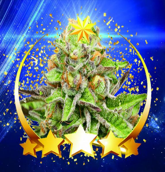 Alrakis Green Gelato